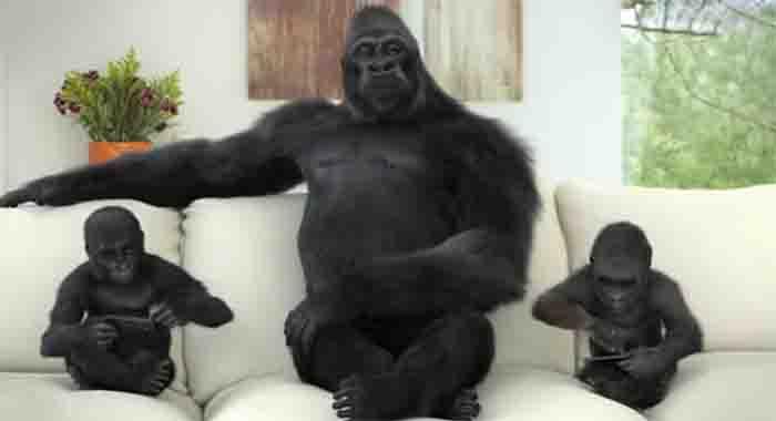 图4:康宁大猩猩玻璃创意广告动画制作